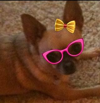 belle glasses n bow